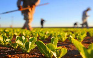 Agricultura, o berço da humanidade
